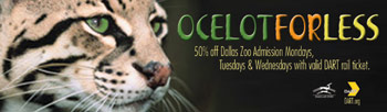 Ocelot For Less Poster
